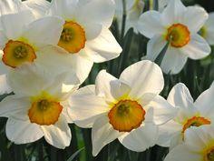 Morning garden from slowlovelife.com