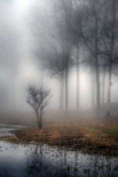 The #tranquility of the #mist by #Alexander #Arntsen