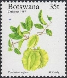 Sello: Zeyheri (Botswana) (Plants) Mi:BW 654,Sn:BW 651,Yt:BW 800