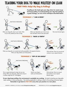 A collaboration with Irith Bloom www.TheSophisti .. - CLICK THE PIN for Various Dog Training Ideas. #dog #puppytraining