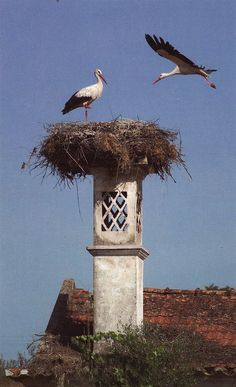Storks nesting,Algarve. It was amazing to see the places that the storks built their nests