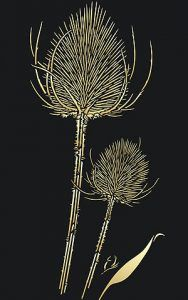 1 sheet intricate stencil The stunning Wild Teasels Stencil is a delicately cut, intricate design, with each teasel spike creating the perfectly formed elegant thistle-like heads, on two separate stalks. Use this exquisite stencil for sophisticated contemporary design notes in living spaces, halls,