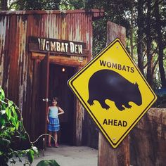 She's not old enough to hang out on the ropes course but she'd be happy to hang in the Wombat Den ALL DAY! #wombats #shelovesthem #currumbinwildlifesanctuary #currumbin #visitgoldcoast #thisisqueensland by tatzja http://ift.tt/1X9mXhV