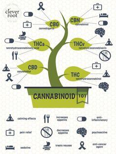Cannabinoids 101 Cannabis EDUCATION Guide THC CBD CBB CBG MORE https://www.cbd-cannabis-oil.com/blogs/news