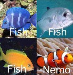 Asi es como veo a los peces.... #SoTrue #lol