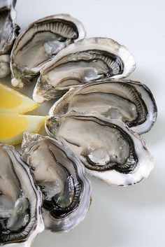 Oyster lovers'