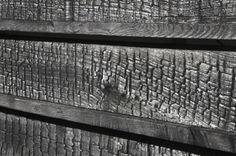 StudioErrante Architetture: Wood and the Dog - Thisispaper Magazine
