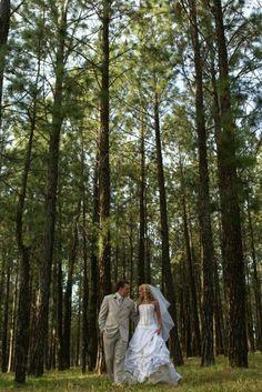 Bryanston Forest