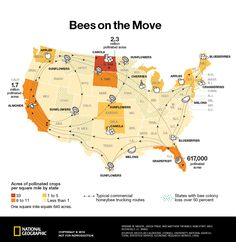 According to the Department of Agriculture, one-third of the #foods in the U.S. diet rely on #bees and other pollinators. To see bees pathway on the move click the image.