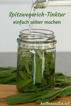 Mückenstiche mit Spitzwegerich-Tinktur lindern Use ribwort tincture as a practical aid in mosquito bites. So you make yourself a cheap tool for traveling. Dumb Cane Plant, Citronella Plant, Mosquito Repelling Plants, Garden Care, Garden Tips, Propagation, Natural Cosmetics, Plant Care, Natural Health