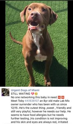 4/6/17 STILL THERE!! 4/4/17 PRECIOUS TOBY NEEDS SHARES TO GET OUT OF MDAS ALIVE!! SOMEONE MUST STEP UP FOR THIS POOR GENTLEMAN! PLEASE HELP HIM! /ij https://m.facebook.com/urgentdogsofmiami/photos/a.474760019225073.115405.191859757515102/1513776828656715/?type=3&theater