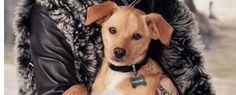 Profession chien de star   https://fr.chabadog.com/mag/document/VboFPyAAALYAv4kx/profession-chien-de-star/