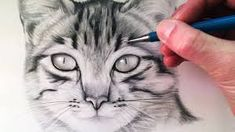 Image result for realistic cat face drawing
