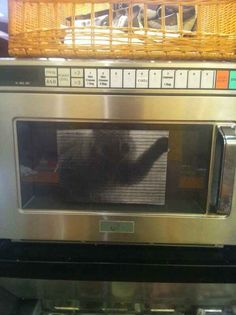 Putting a paper picture of a cat in a microwave is totally uncalled for.