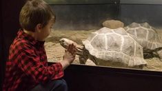 a child looking at a turtle at and touching the screen sparking the child's curiosity