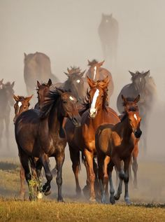#horses #brown #herd #galloping