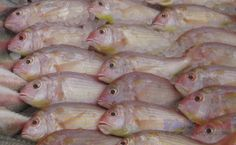 A list of Philippine fish names in English and Filipino (Tagalog), with some scientific names and fish pictures to help identify particular . Animals Name In English, Goldfish Types, Fish Chart, Oscar Fish, Animal Worksheets, Fish Pie, Fish Stock, Pet Fish, Types Of Fish