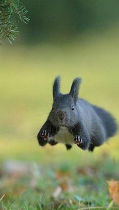 Hover Squirrel
