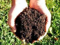 Feed the Soil First – Organic Gardening – MOTHER EARTH NEWS