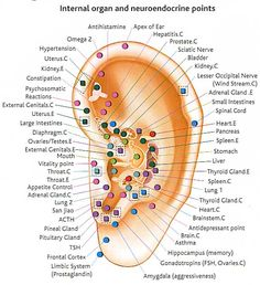 Auriculotherapy is a health care procedure in which stimulation of the auricle of the external ear is utilized to alleviate health conditions in other parts of the body. While originally based upon the ancient Chinese practices of acupuncture, the somatotopic correspondence of specific parts of the body to specific parts of the ear was first developed in France. It is this integrated system of Chinese and Western practices of auricular acupuncture which is presented.