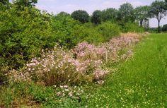 Houtwal met faunarand en krudenrijk grasland