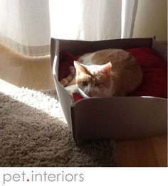Kater Nicky genießt den BOWL Katzenkorb aus Filz. Male cat Nicky enjoys his cat bed BOWL in felt. Maschio gatto Nicky gode il suo letto gatto.