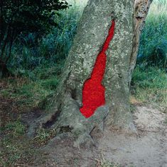 Nils-Udo, sans titre, 1993, hêtre, sorbes, Langeland, Danemark, Ilfochrome sur aluminium, 98x98cm