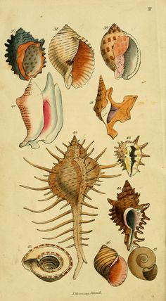 Wodarch's introduction to the study of conchology : - Biodiversity Heritage Library