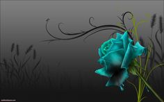 abstract Rose Tattoos | images of wallpapers tattoo colourful gothic black rose back 1680x1050 ...