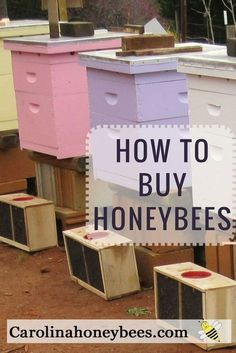 So many choices when you start #beekeeping. Buying bees, package bees or nucs. Learn more. #bees #honeybees #beekeepers