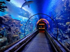 Shark Reef // General Admission: Adults: $18.00 // Kids (5-12): $12.00 //  Kids (4 & under): free // Seniors (60+): $16.00 // Hours: Sun - Thurs 10 am-8 pm //  Fri & Sat 10 am-10 pm // Summer Hours(May 24- Sep 1) Daily 10 am-10 pm //  Last admission one hour prior to close. // At Shark Reef you can see all kinds — sawfish, giant rays, endangered green sea turtles, piranha, jellyfish & the rare golden crocodile. In all, there are over 2,000 animals in 1.6 million gallons of water.