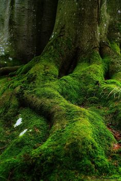 Forest moss (1) From: I Recall The Push More Than The Fall, please visit
