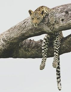 Lazy day:) #animals #funny
