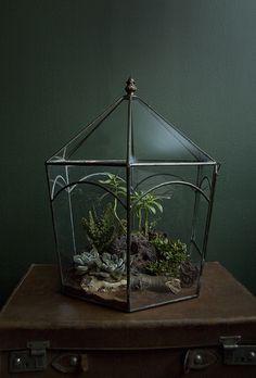 Planting in a Vintage Terrarium | by Ken Marten