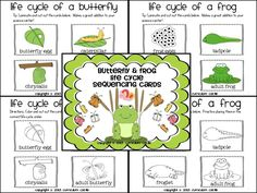 Life cycle of butterfly and frog sequencing cards in color and black white! 2nd Grade Activities, School Age Activities, 1st Grade Science, Kindergarten Science, Preschool Themes, Teaching Science, Classroom Fun, Science Classroom, Classroom Activities