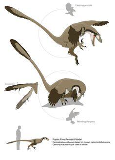 Paravians studies - Raptor Prey Restraint Model