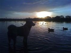 The beauty experienced in duck hunting is perfectly matched by the reward.