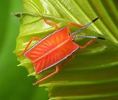 orange insects -