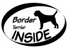 5 Things to Know About Border Terriers | 176x236