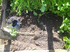 Így ültesd el a paradicsomokat – fotósorozat   Nagybetűs Élet Terrarium, Plants, Terrariums, Plant, Planets