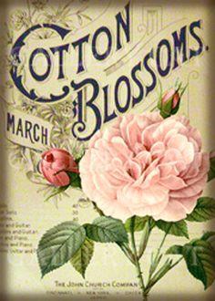 rose Vintage Diy, Vintage Rosen, Images Vintage, Vintage Labels, Vintage Ephemera, Vintage Pictures, Vintage Paper, Vintage Postcards, Printable Vintage