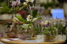 Intratuin Fair 2013 Intratuin 's-Gravenzande #orchidee