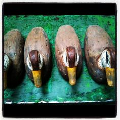 collezione di anatre Eggplant, Eggplants