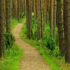 Aukstaitija National Park | Lithuania (by* Regin@ *)