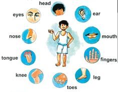 learning pictures for toddlers | body parts | English for Kids