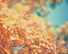 Autumn Photography Orange Decor Nature Picture by LisaRussoFineArt,