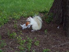 albino squirrels?  really?  nightmares begin.
