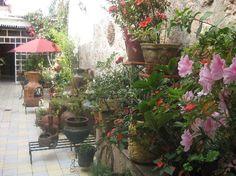 the courtyard garden at Casa Rosa!
