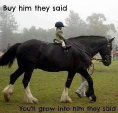 Smiling...: Gentle Giant, Draft Horses, Animals, Equine, Big Horses, Kids, Things, Beautiful Horse, Equestrian