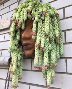 Hanging plants, creative ideas for hanging plants indoors and outdoors - ideas for hanging planters Succulent Gardening, Cacti And Succulents, Planting Succulents, Container Gardening, Planting Flowers, Flowering Plants, Succulent Hanging Planter, Succulent Ideas, Vertical Planter